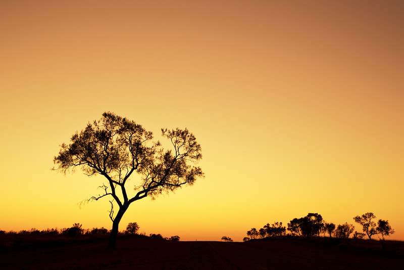 The Road to Quilpie