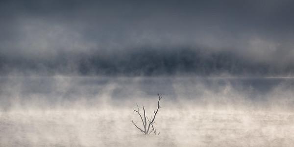 Tree&Mist-9843
