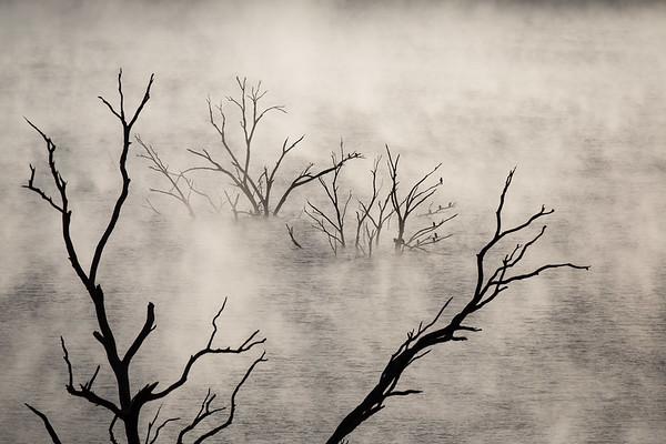 Tree&Mist-9856-2