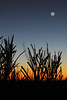 Rising Moon, Western Australia