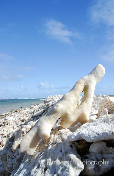 Coral, Western Australia