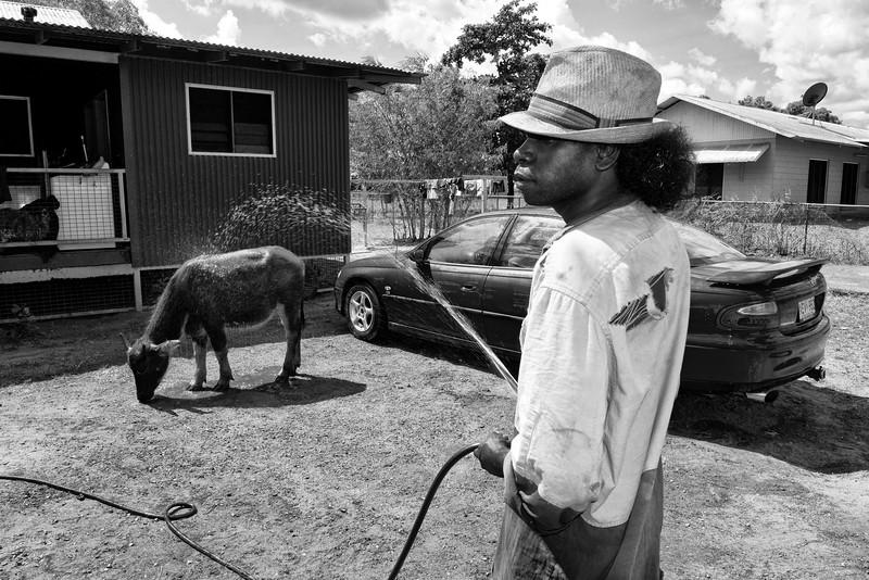 Le jeune Kason, de la communauté de Gapuwiyak, rafraîchissant son jeune buffle Berry à l'aide d'un tuyau d'arrosage. Terre d'Arnhem/Territoire du Nord/Australie