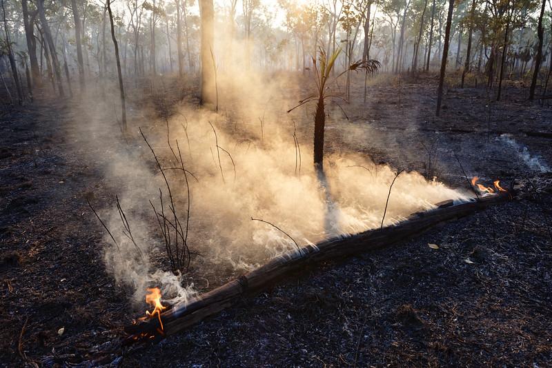 Tronc d'arbre se consumant dans une zone de feu de bush. Terre d'Arnhem/Territoire du Nord/Australie