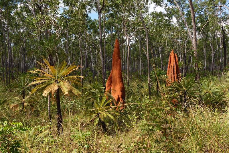 Termitières dans le bush près de Gapuwiyak. Terre d'Arnhem/Territoire du Nord/Australie
