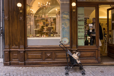 """Ill-mannered pug"" has to stay outside Salzburg coffee shop because he doesn't do well with the other dogs."