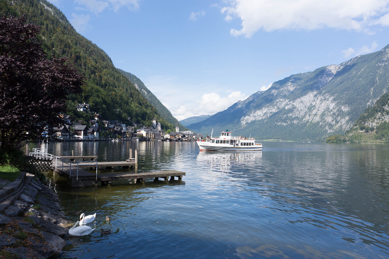 Swans on Lake Hallstatt