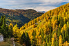 A larch forest in the mountains near Kremsbruck, Austria, Europe.