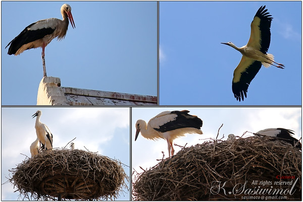 A nest of Storks above the chimney in Rust, Burgenland - Austria