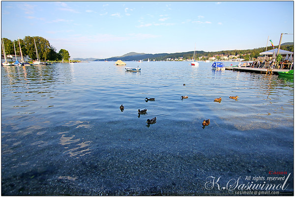 Evening swim (ducks, not me) at the Wörthersee in Carinthia, Austria