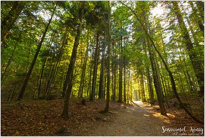 Path thru a beautiful forest with yellow shade of Autumn