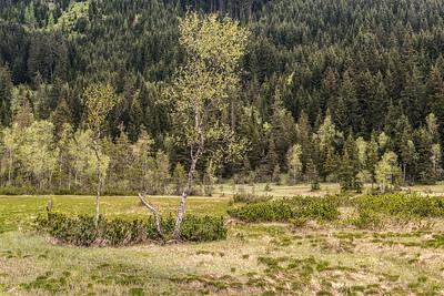 Hochmoor-Salzburgerland_2827