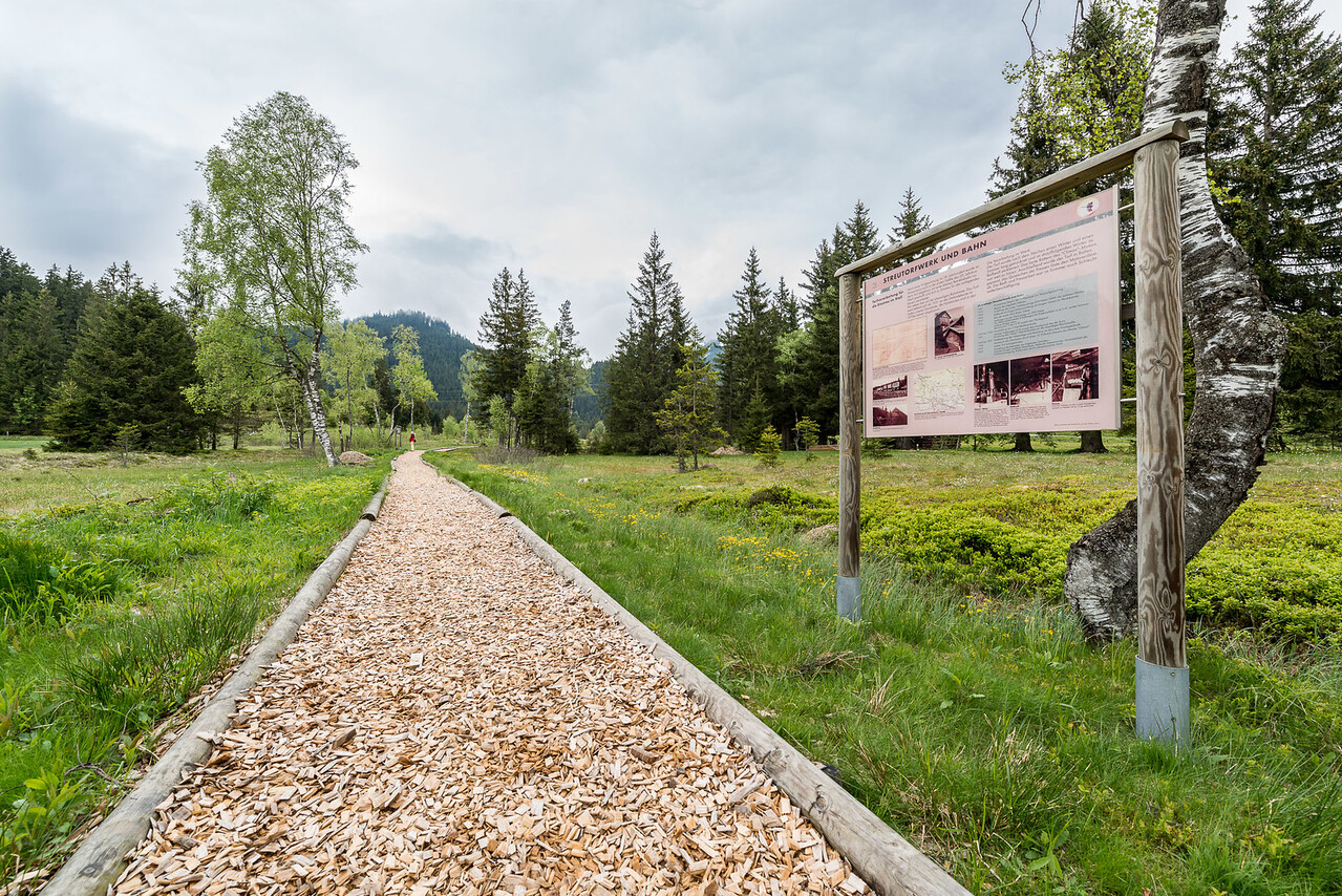 Hochmoor-Salzburgerland_2804