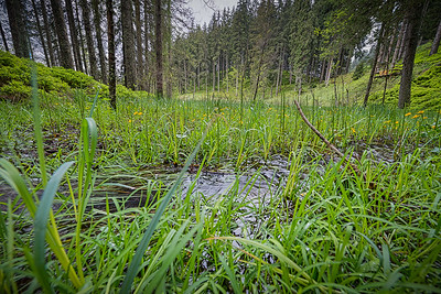 Hochmoor-Salzburgerland_2857_6_5_4_3_HDR projects
