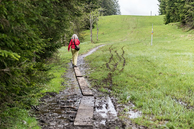 Hochmoor-Salzburgerland_2866