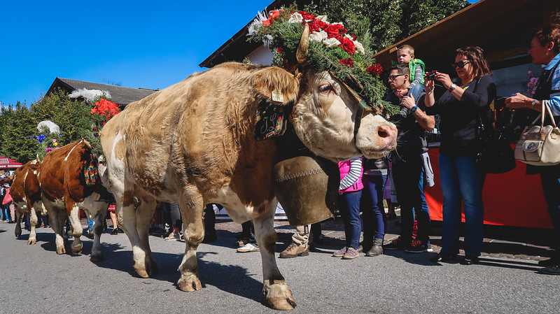 Watching the cattle parade in Reith im Alpbachtal