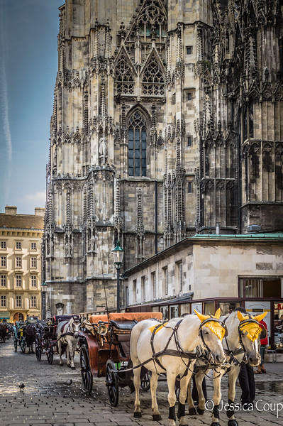 Horses Outside St. Stephen's Cathedral