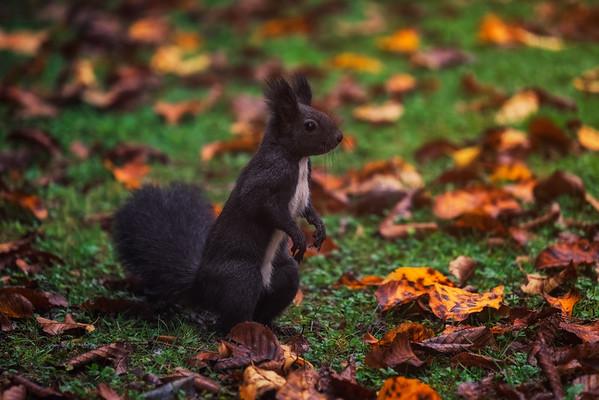 Nut lover