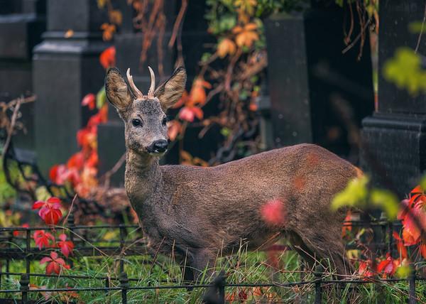 My deerest friend