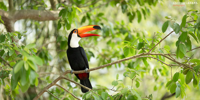 Happy Tucan