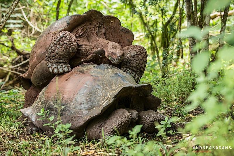Galapagos Love