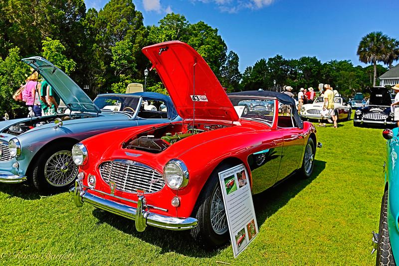 Austin Healy-485