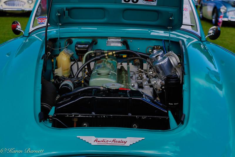 Austin Healy-454