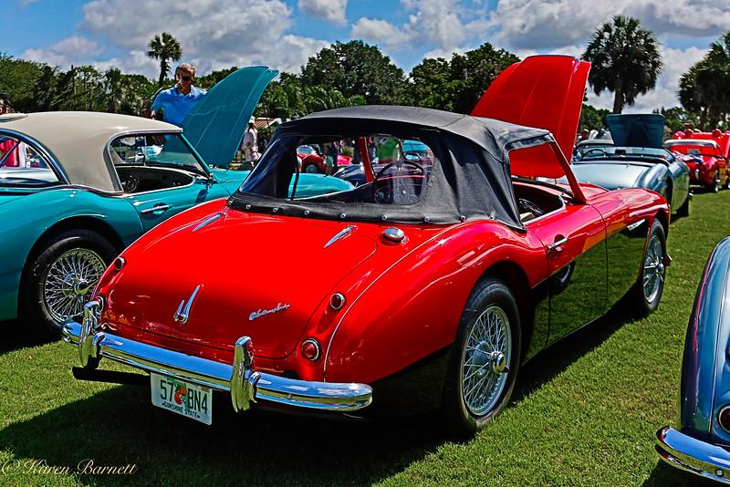 Austin Healy-528
