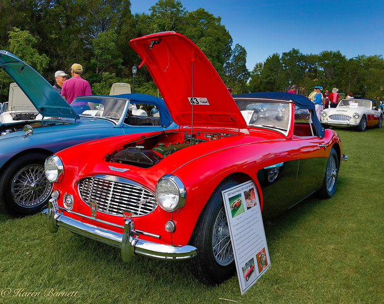 Austin Healy-489