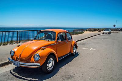 The Orange Bug