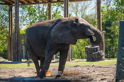 2018 Amelia Concours - Zoo Tour 023A - Deremer Studios LLC