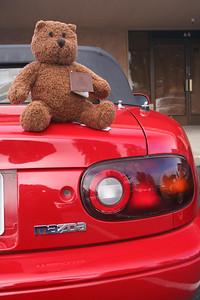 Samoa Teddy Bear Run 2007