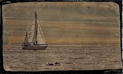 Sail Boat - Tin Type