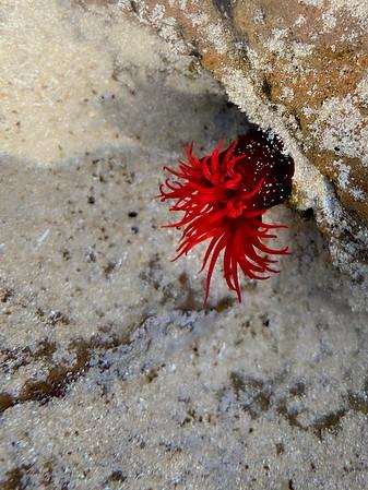 Vibrant anemone