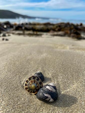 Trio of shells