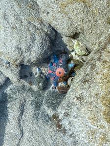Submerged starfish