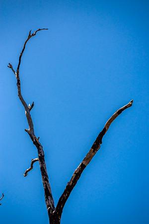 Tree of no life