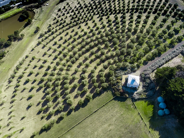 The House on the Hill olive grove