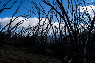 High Country-JUN2018-Mount-Hotham-Dead-Trees