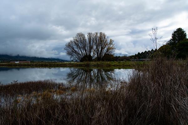 High Country-JUN2018-Mount-Beauty-Lake-Tress-Freflection