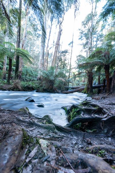 Upper Yarra River