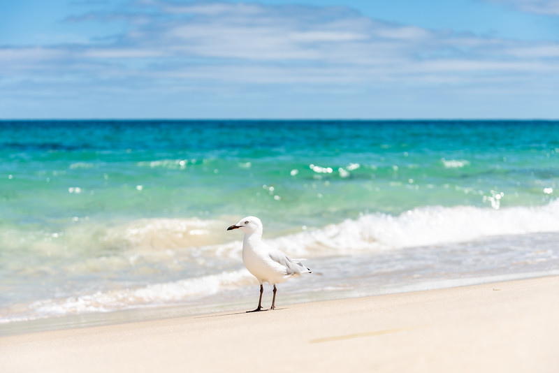 Perth-FEB2019-Cottesloe-Beach-4.jpg