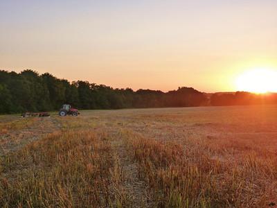 2013 - Coucher de soleil sur le chaume d'un champ de colza.