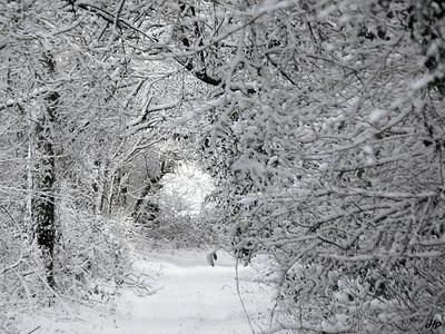 2005 - Chemin enneigé au mois de février