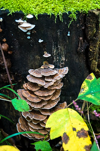 Funghi lined tree stump