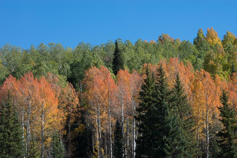 fall 2014-25