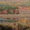 Bashakill wetlands