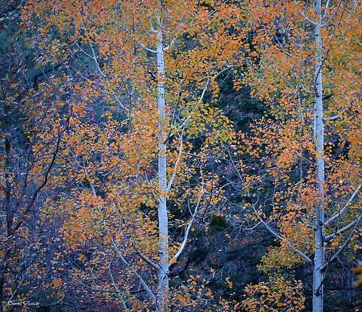 Mount Lemmon Color