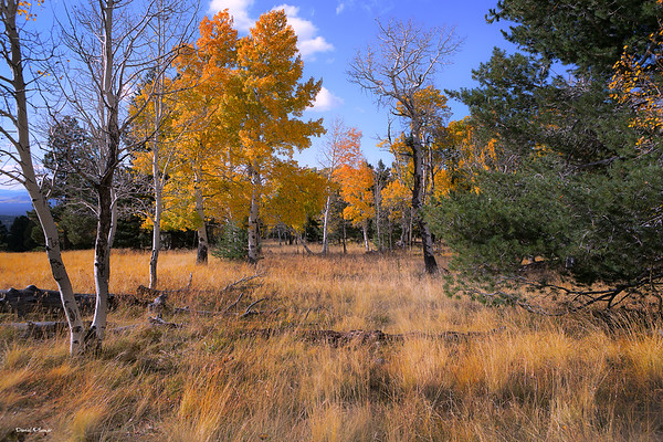 Flagstaff Color