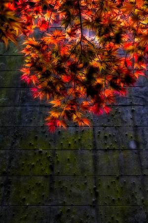 Colorful leaves and Mossy Wall - Portland, OR