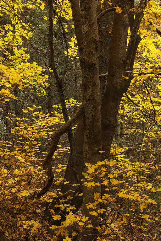 Six Shooter Trail Autumn 4